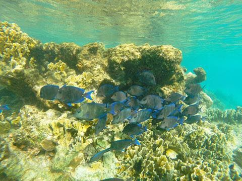 Rent snorkeling equipment