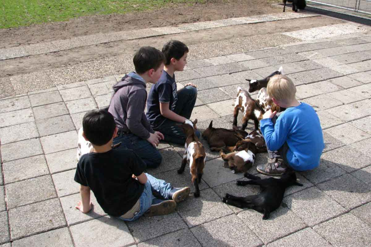 Kinderboerderij Dondertman Holten