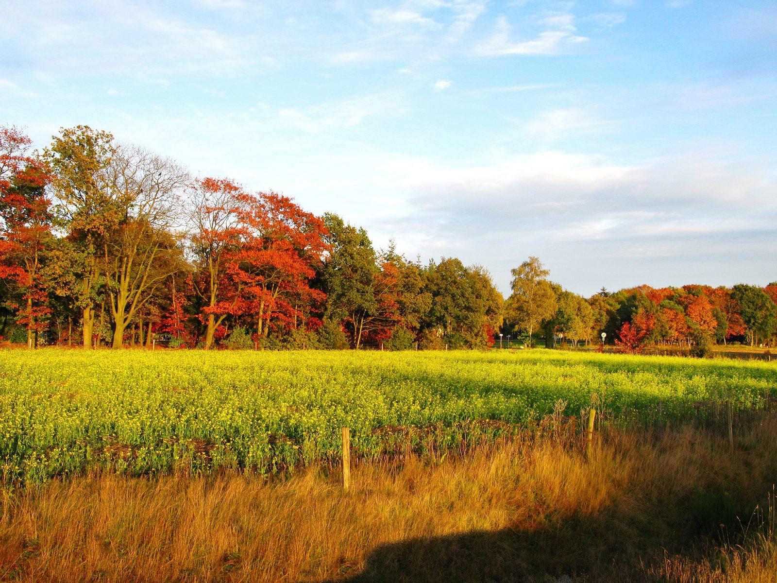 Geniet van de herfstkleuren