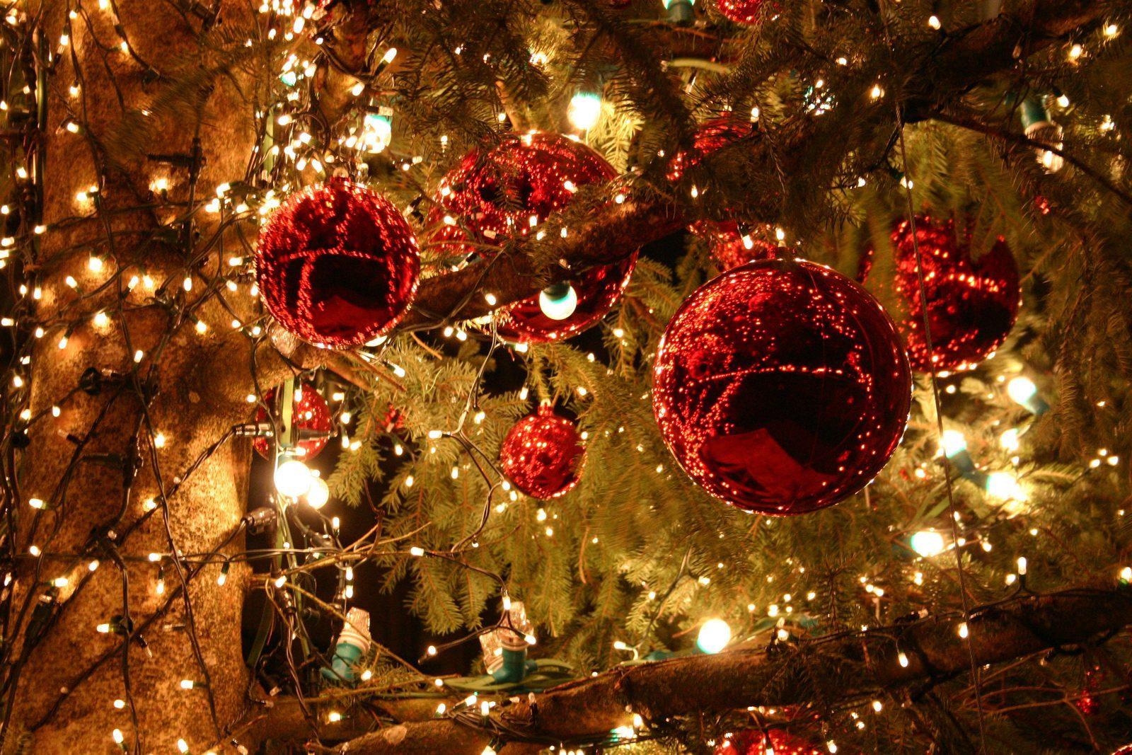 Huisje Huren Met Kerst De Lindenberg