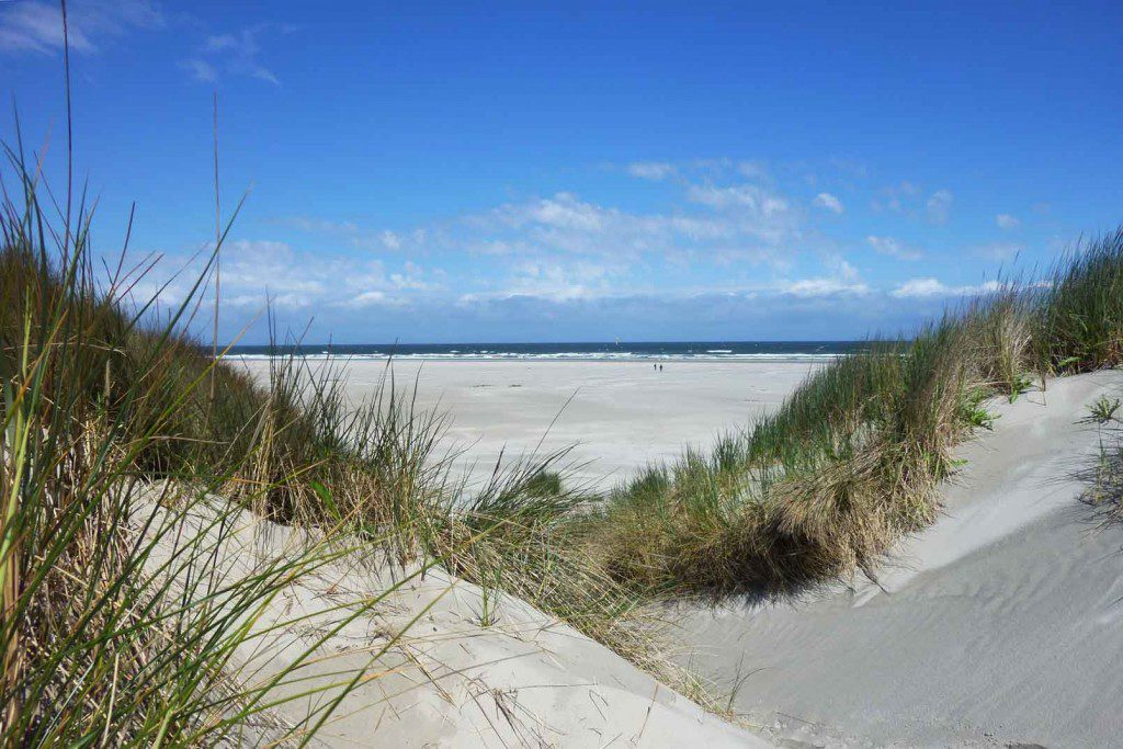 Sea, beach, dunes, forests and meadows: