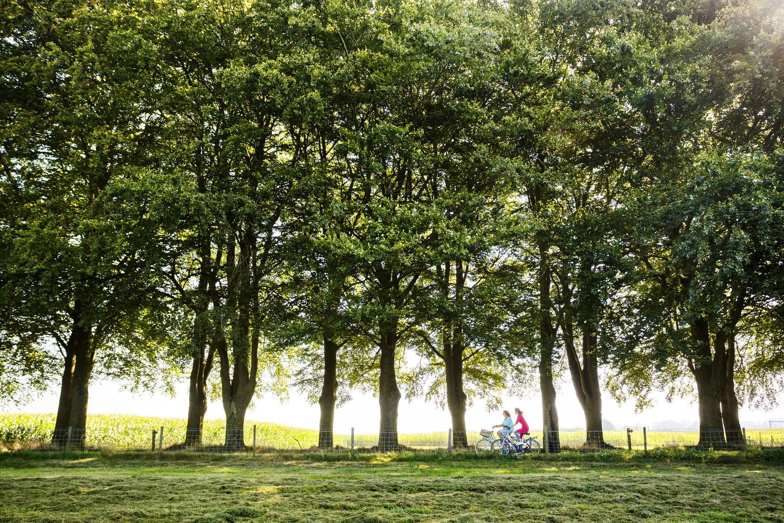Bicycle trips in Holten, Overijssel