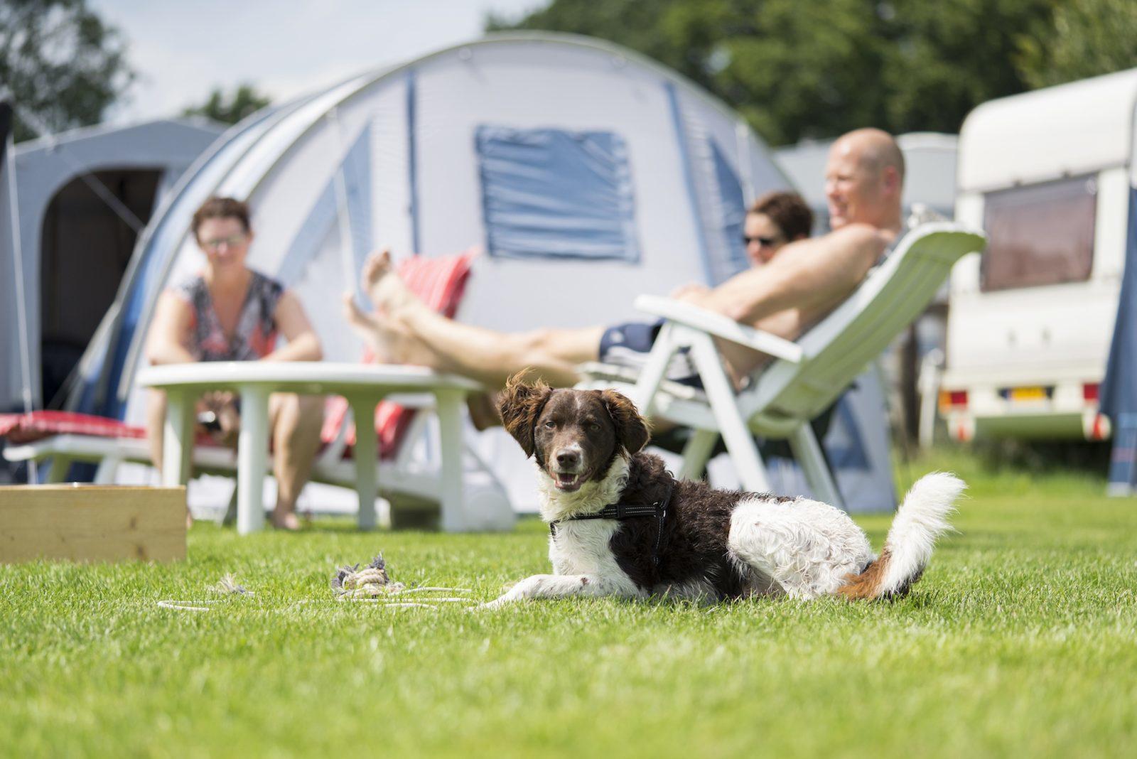 Huisdiervriendelijke camping
