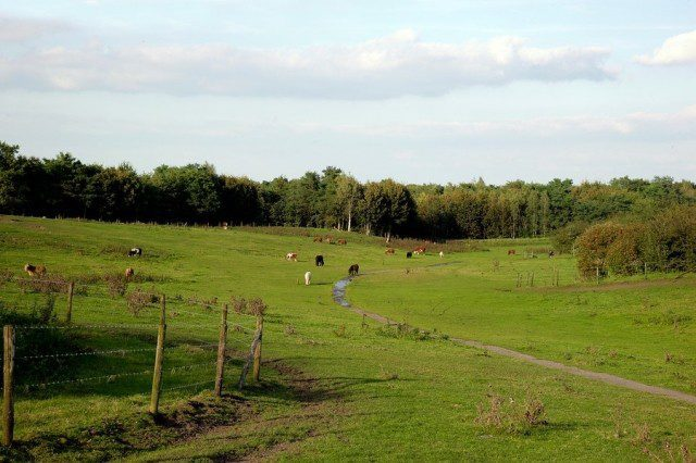 Natuurgebied Collendoorn