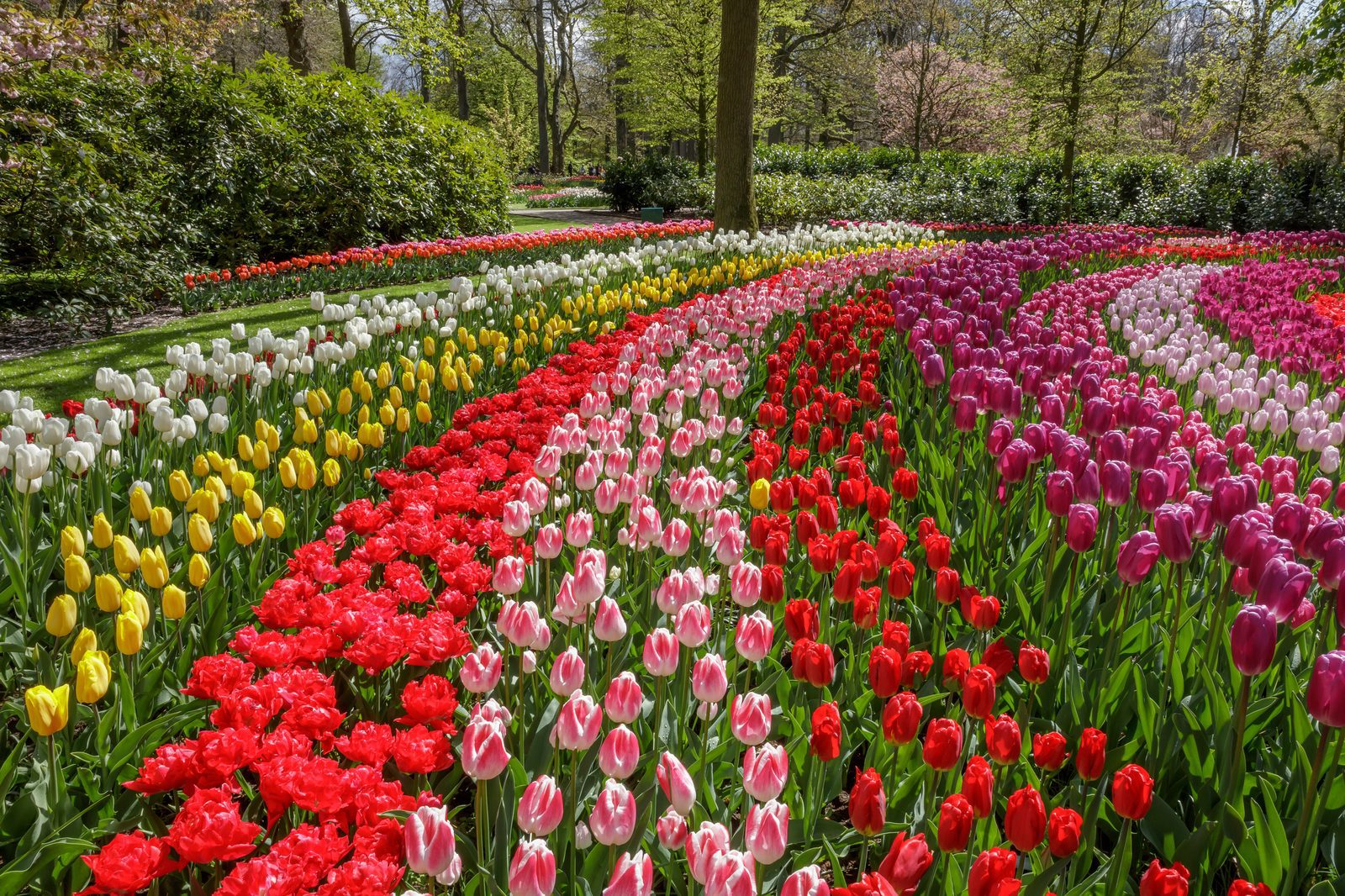 Hotels Near Keukenhof Gardens Amsterdam Garden Ftempo