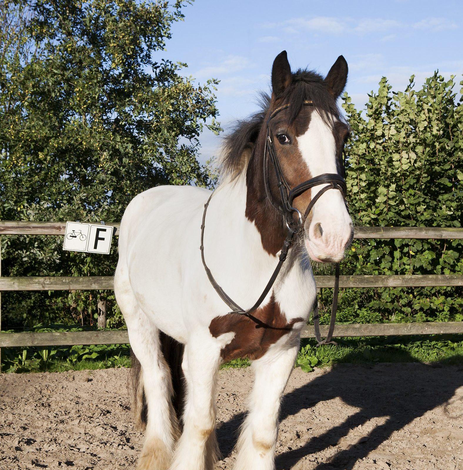 Ponyclub op Recreatiepark De Boshoek