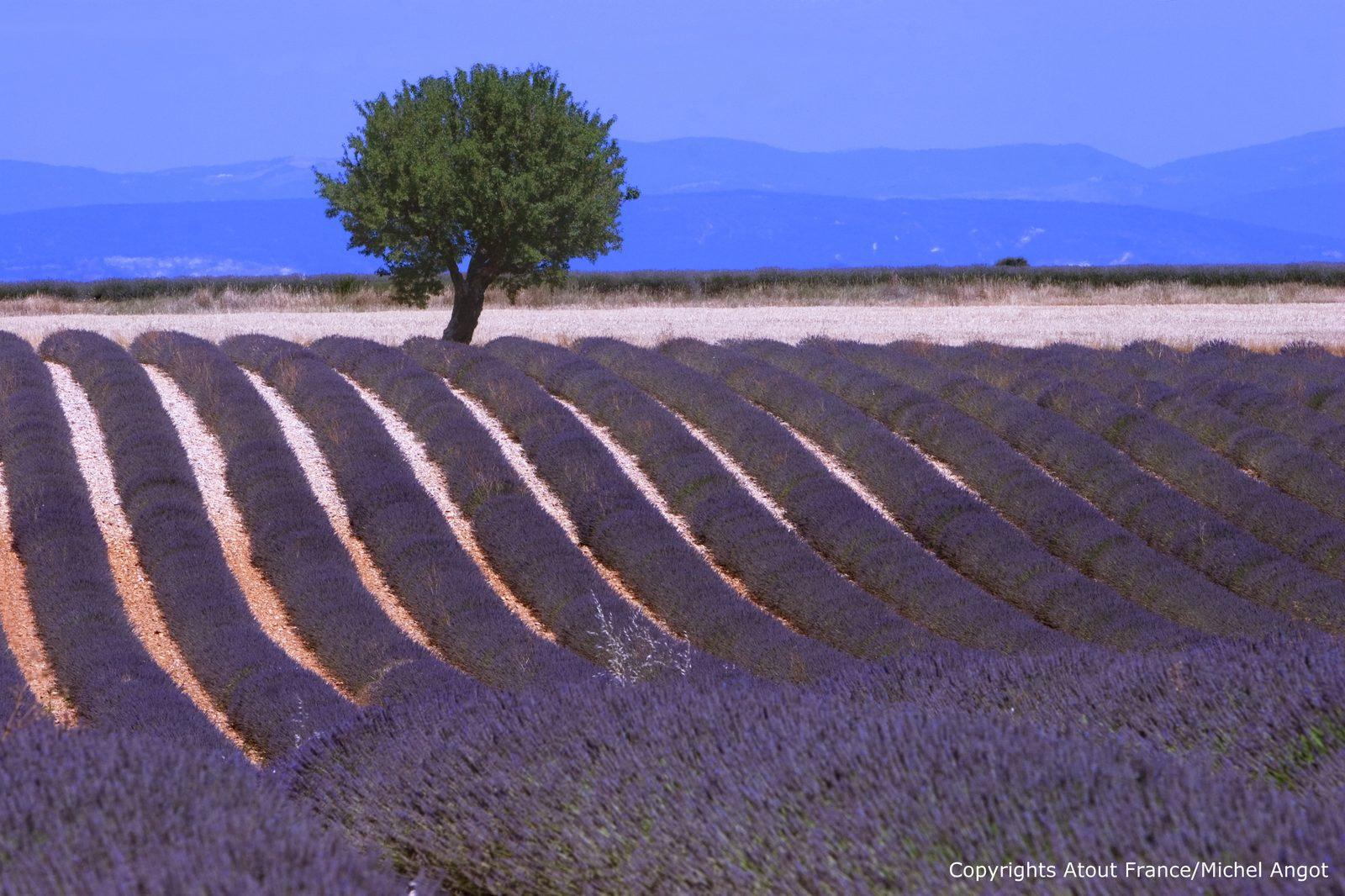 Vakantie in de Provence met geurende lavendelvelden