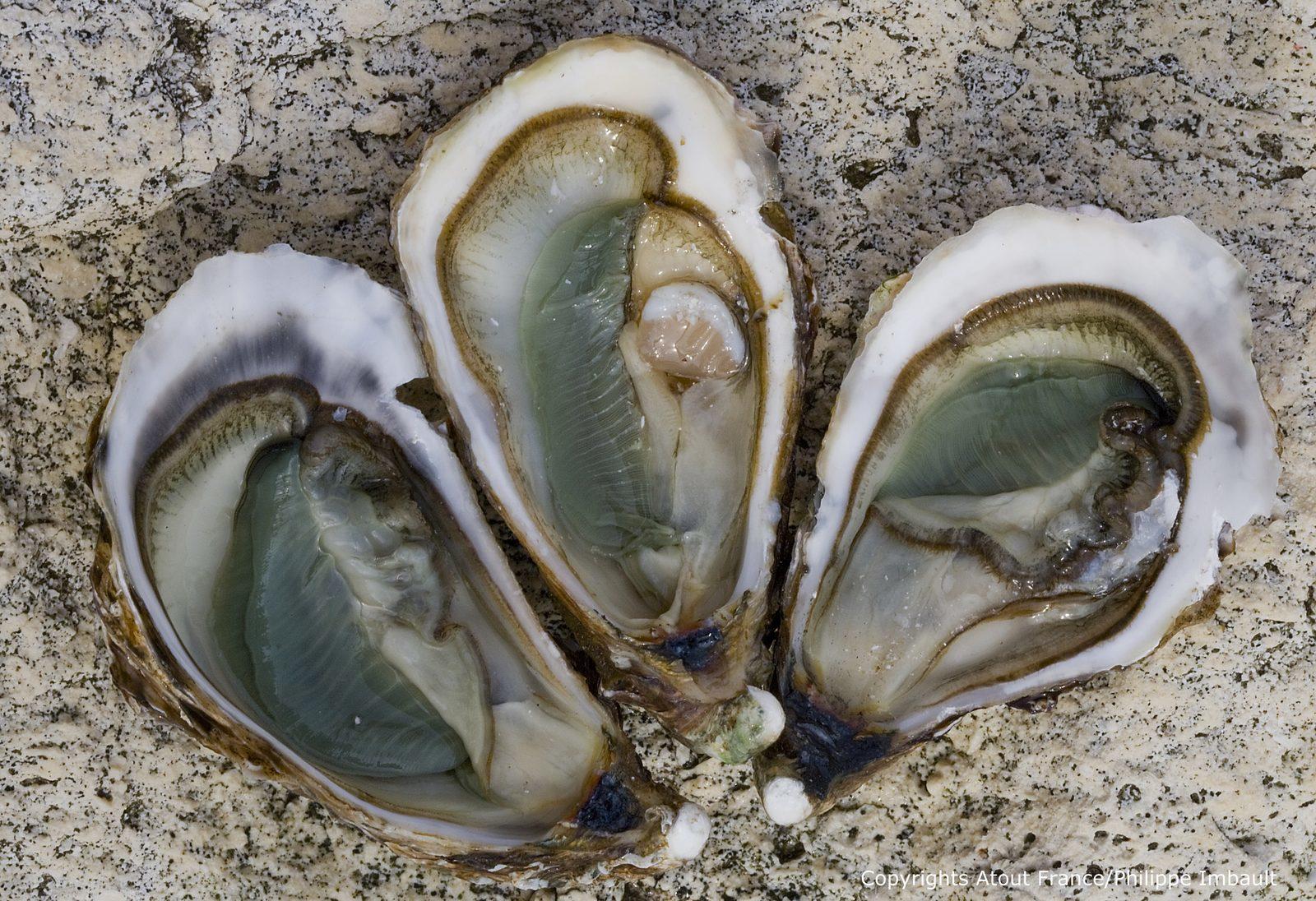 Frankrijk, Charente Maritime, oesters, strand, vakantie, vakantiehuizen