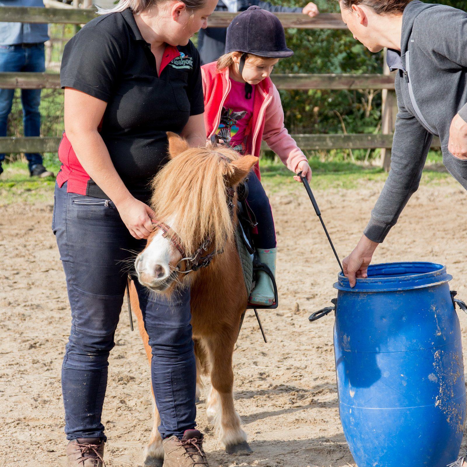 Haal ook jouw diploma op de Boshoek Ponyclub in elke schoolvakantie!