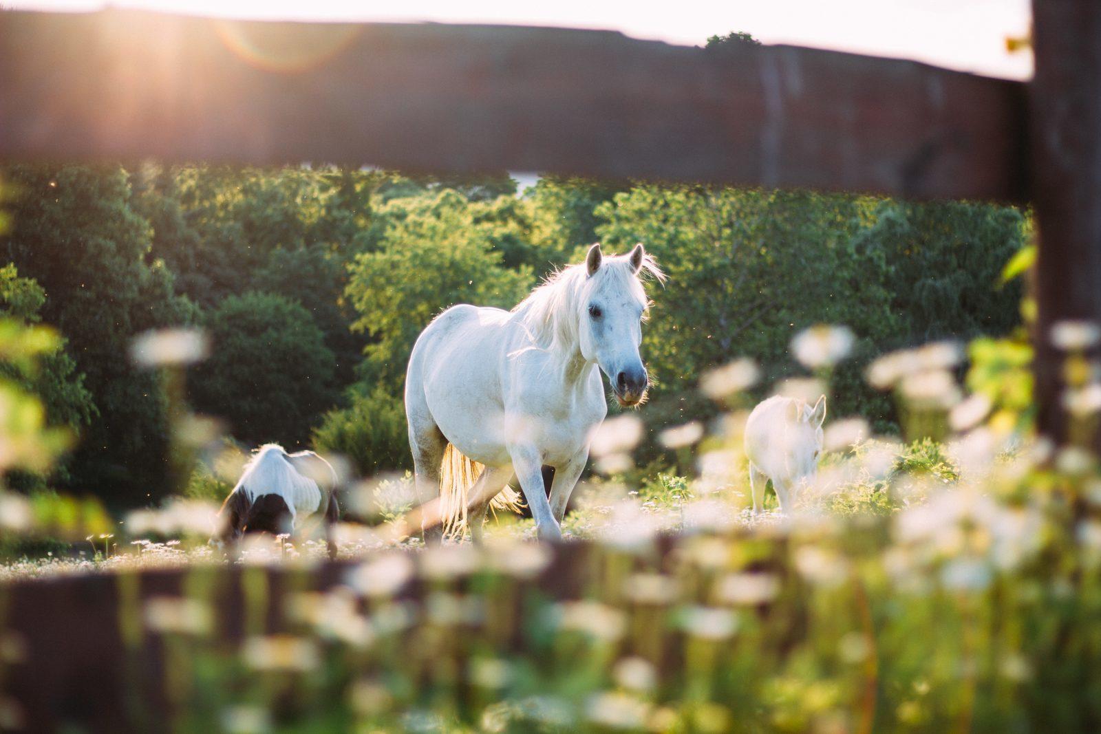 Vrijrijck – Paardenvallei
