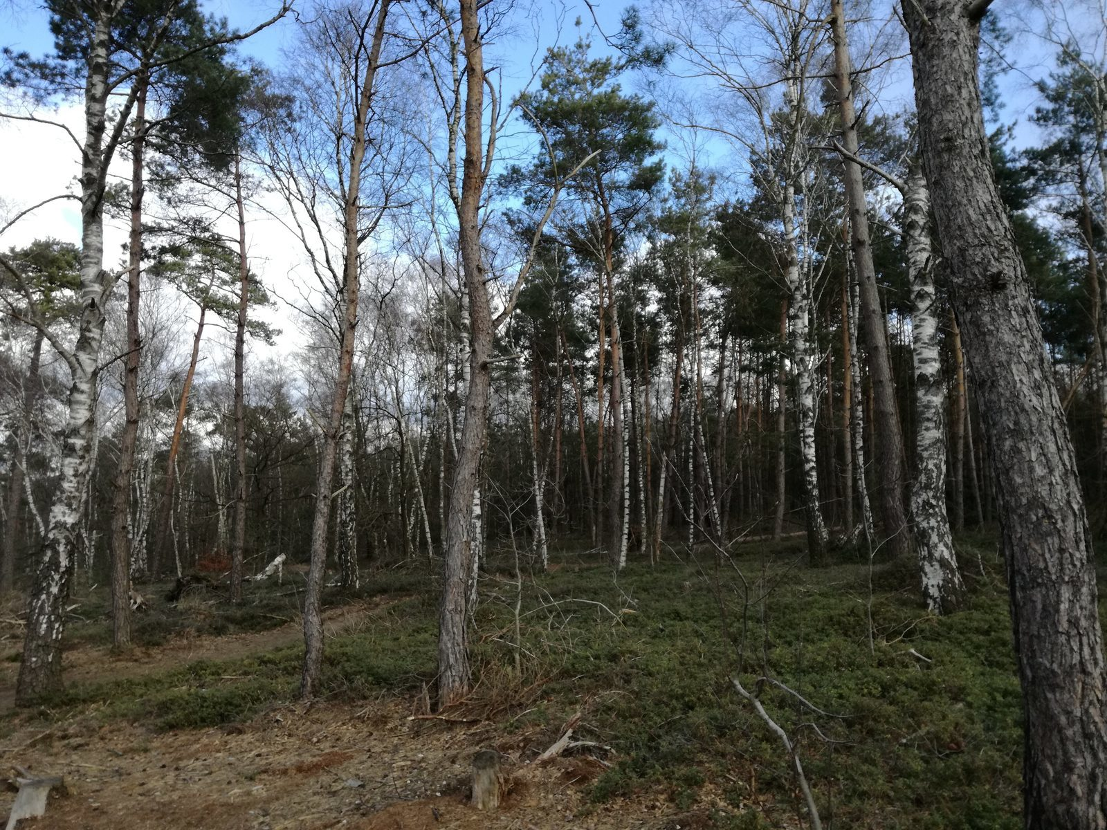 In het bos bij de Holterberg