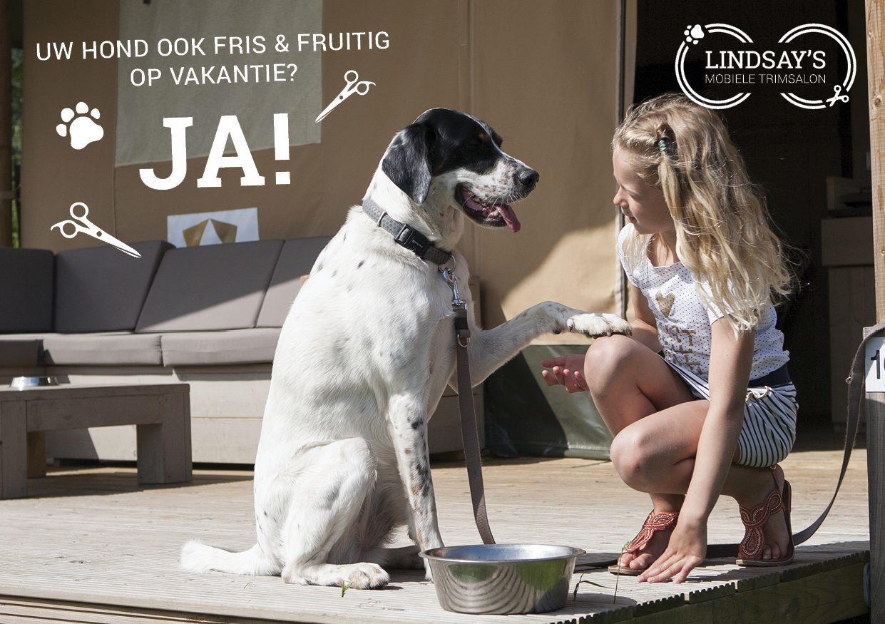 Verwen uw hond in Mobiele Trimsalon