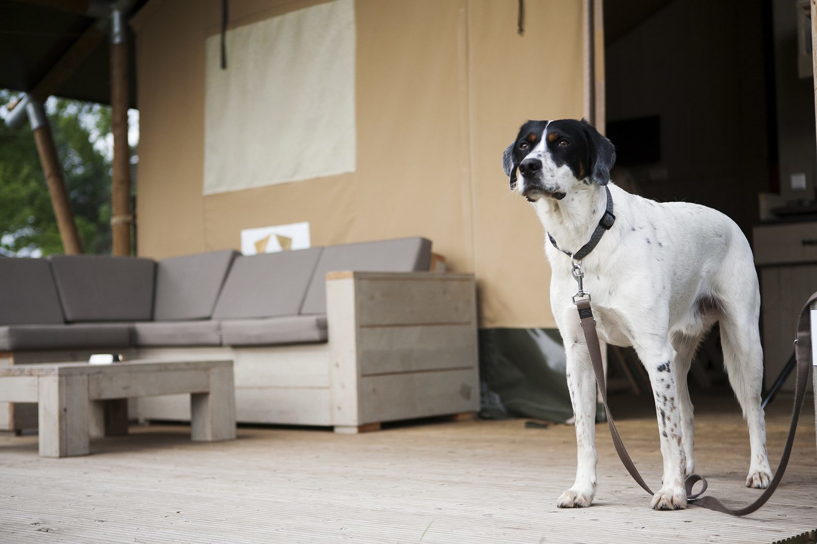 Op vakantie met hond op Recreatiepark De Boshoek
