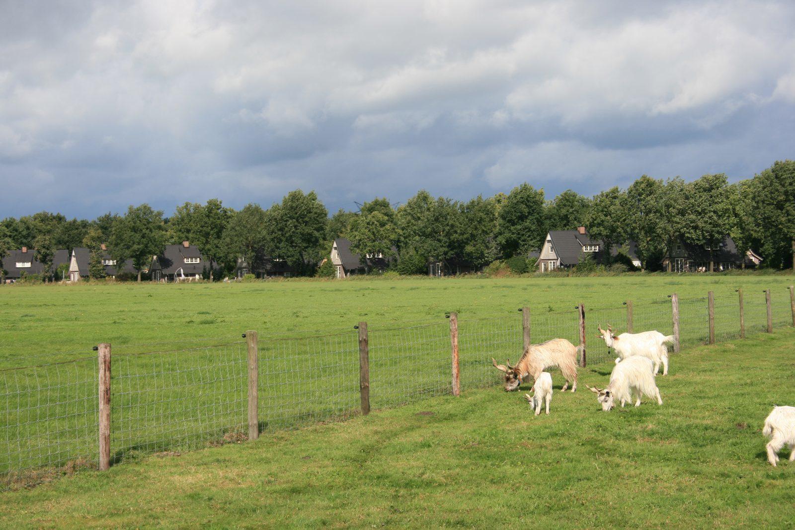 Along the edge of Hof van Salland