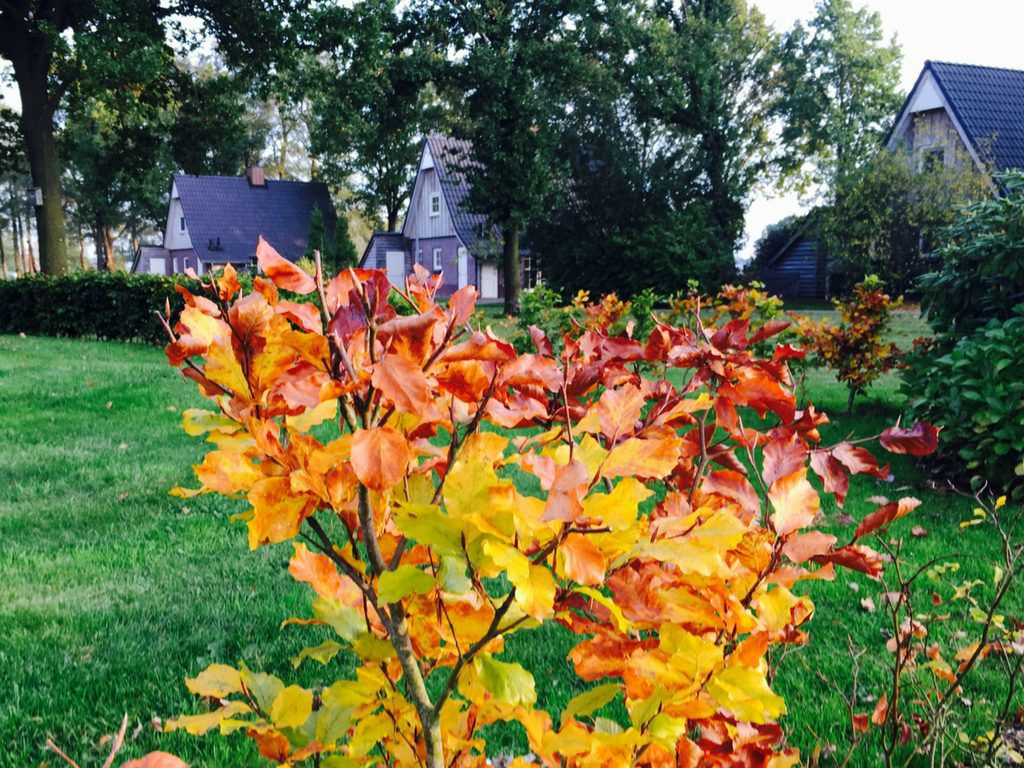 Kleurenpracht in de herfst op Hof van Salland