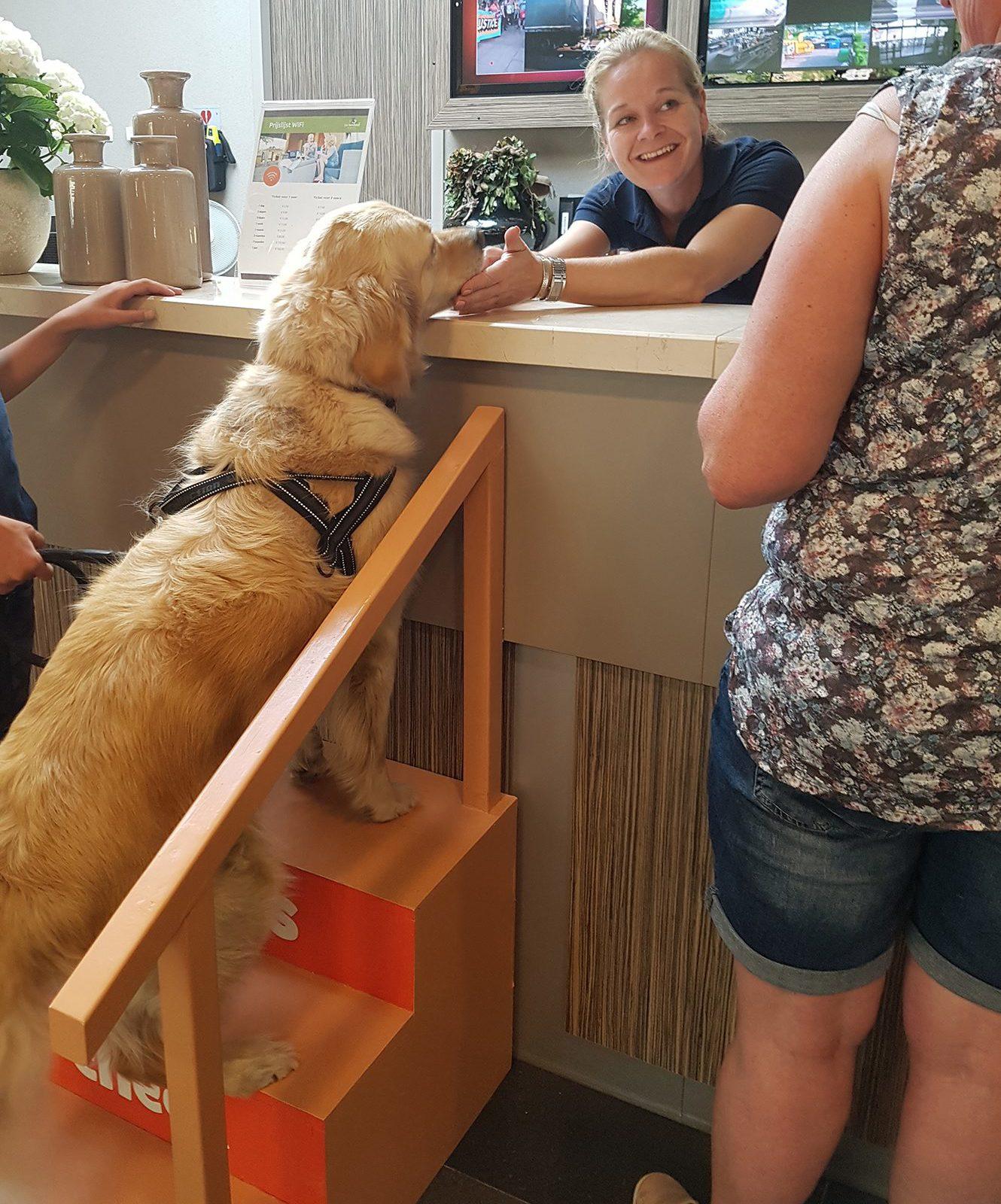 Met hond op vakantie op de Veluwe bij Recreatiepark De Boshoek