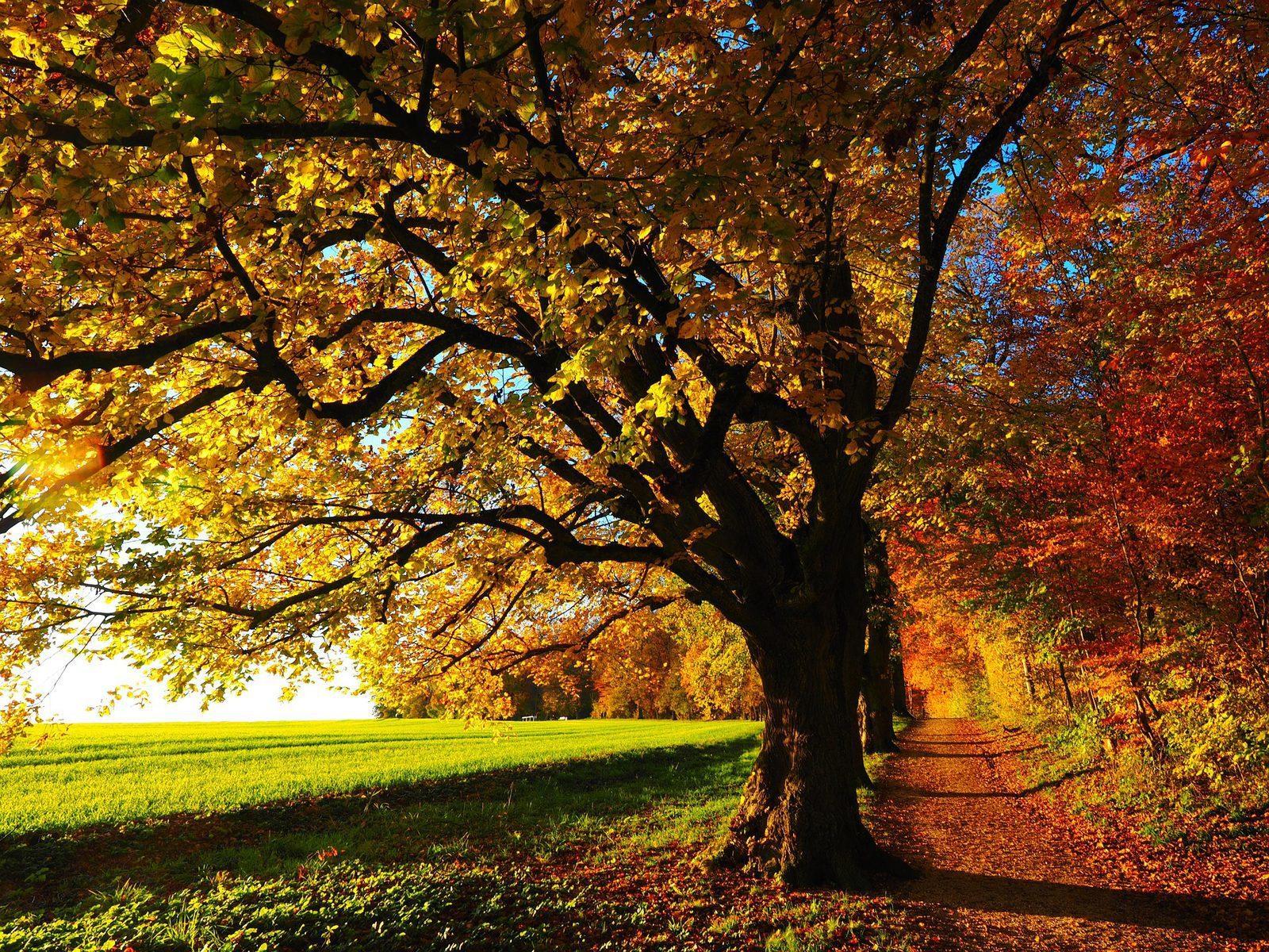 Herfst op de Veluwe!