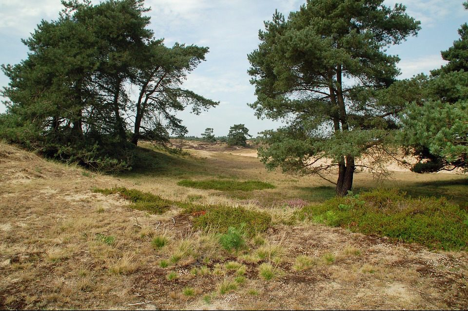 Nationaal Park Drents-Friese Wold - Witterzomer Drenthe