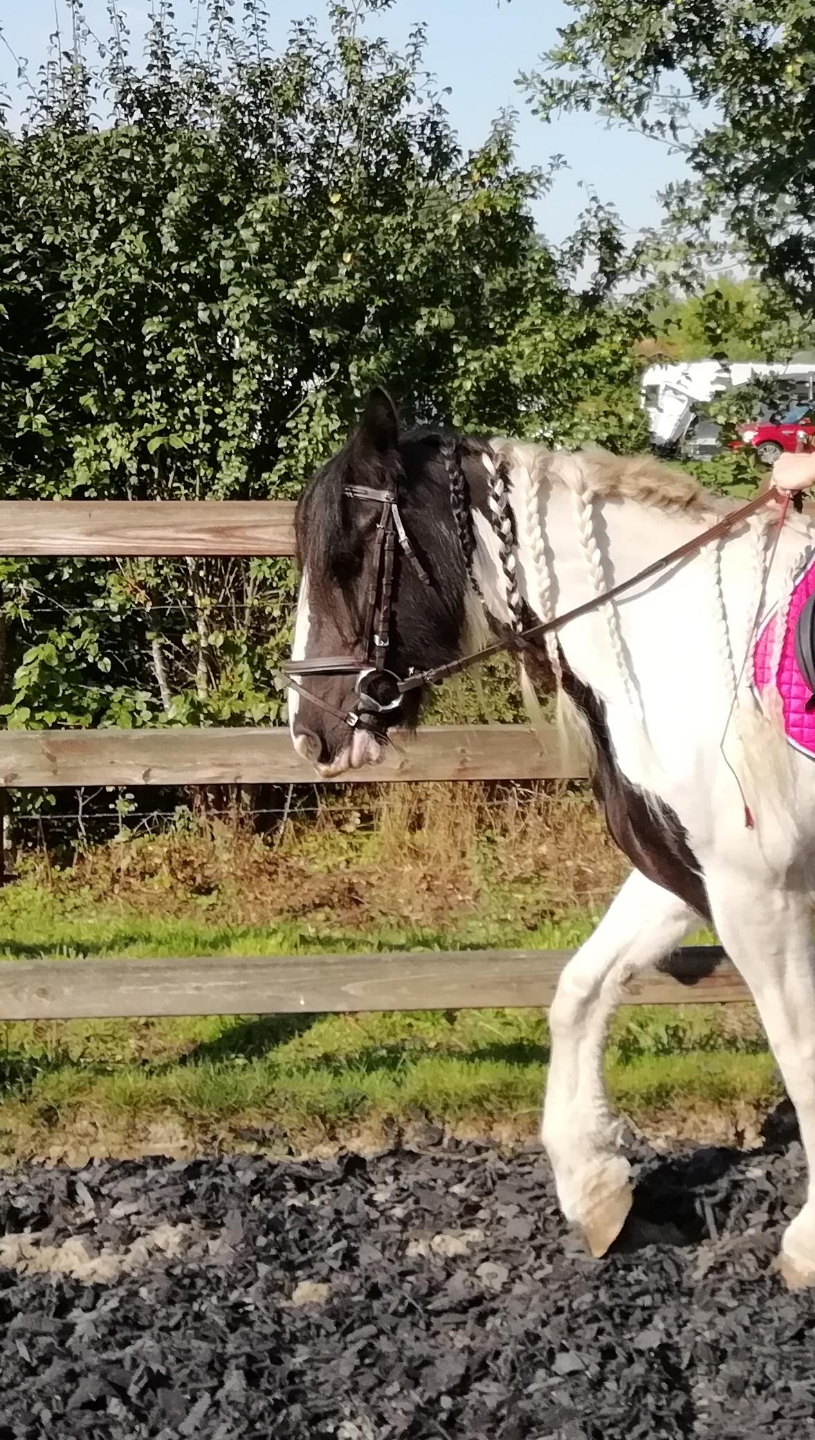 Paardenvakantie Paardrijden Op De Veluwe De Boshoek