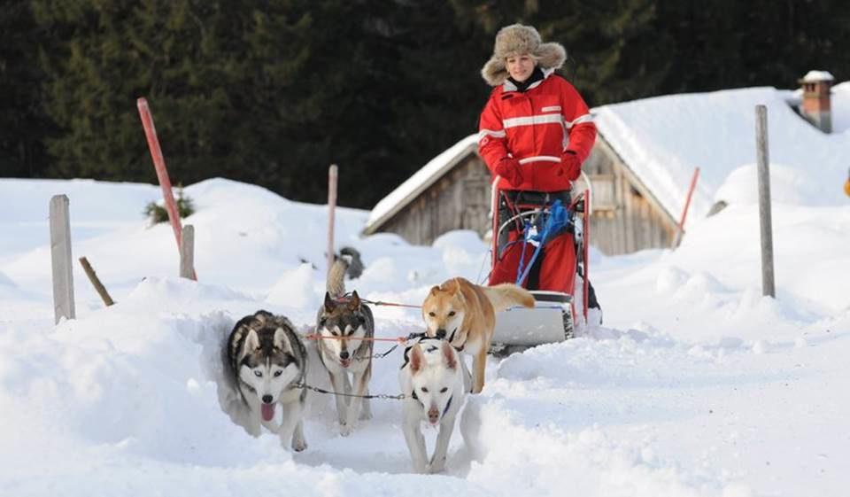 Hundeschlitten-Abenteuer